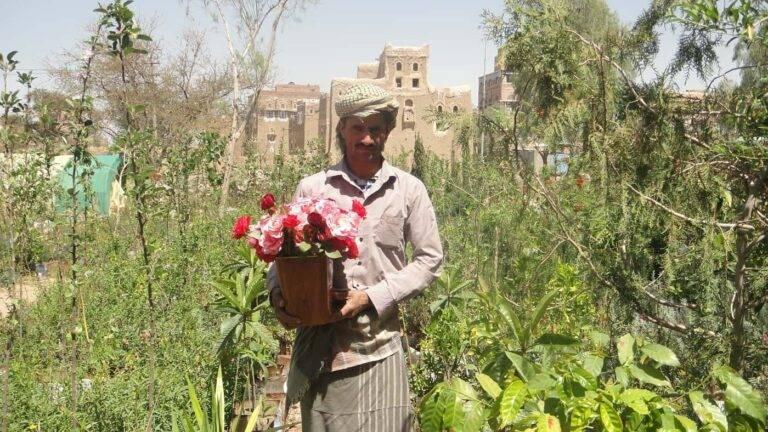 مشتل ربيع درغام في صنعاء