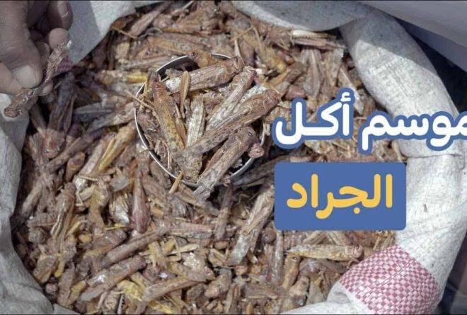 فيديو | كيف يتعامل اليمنيون مع أسراب الجراد الغازية؟