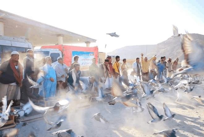 ماهي أدوار «الحمام الزاجل» في حرب «اليمن» المشتعلة؟