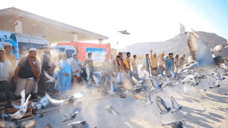 حمام زاجل السلام اليمن